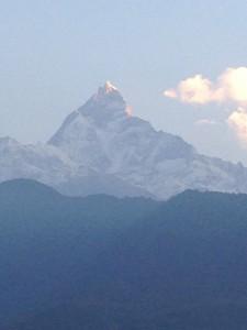 Himalayan_10