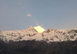 Himalayan310