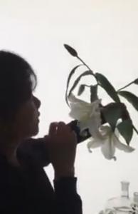 花のエーテル体